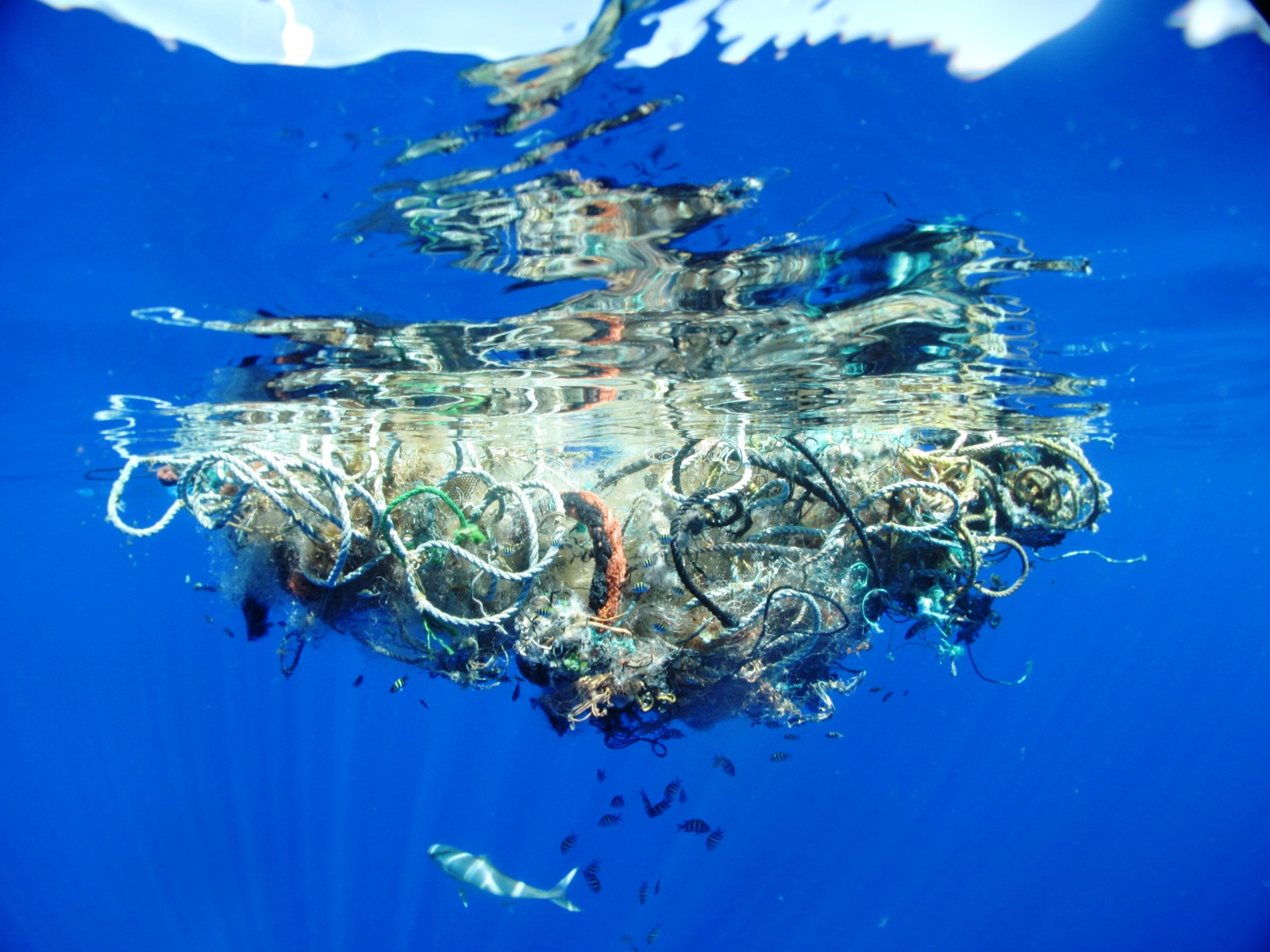 google earth weird things in ocean