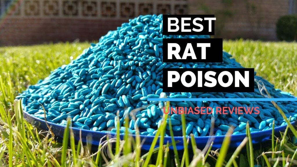 Best rat poison