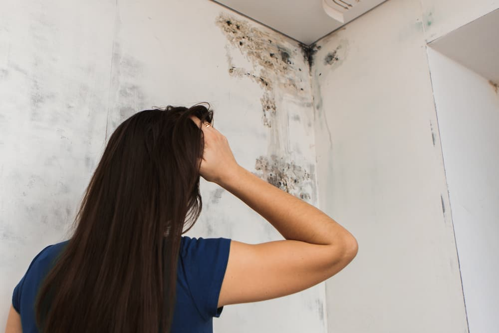 Roof leaks and Mold - Whitehall Carpet Cleaners