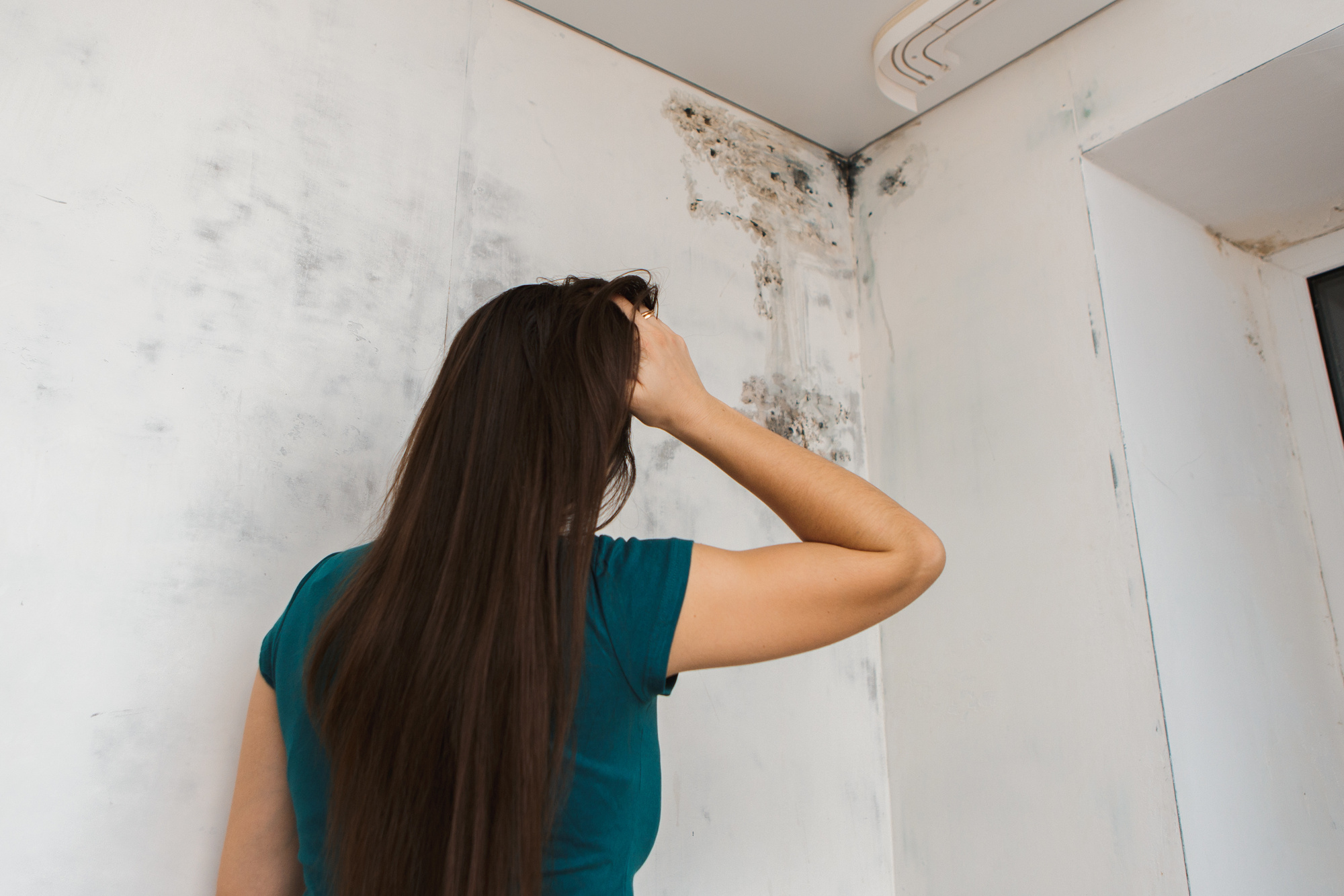 5 Telltale Signs of Mold in Your House