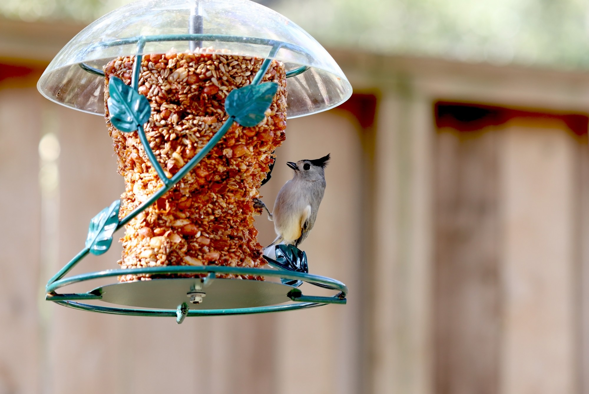 Why Won't Birds Come to My Feeder?: 5 Common Mistakes You May Be Making
